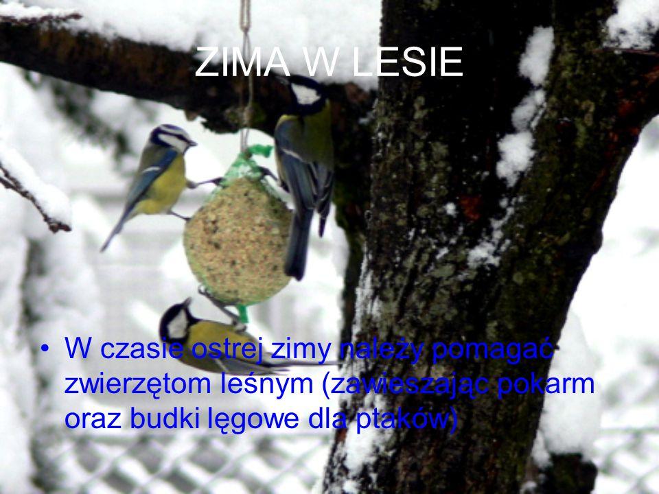 ZIMA W LESIE W czasie ostrej zimy należy pomagać zwierzętom leśnym (zawieszając pokarm oraz budki lęgowe dla ptaków)