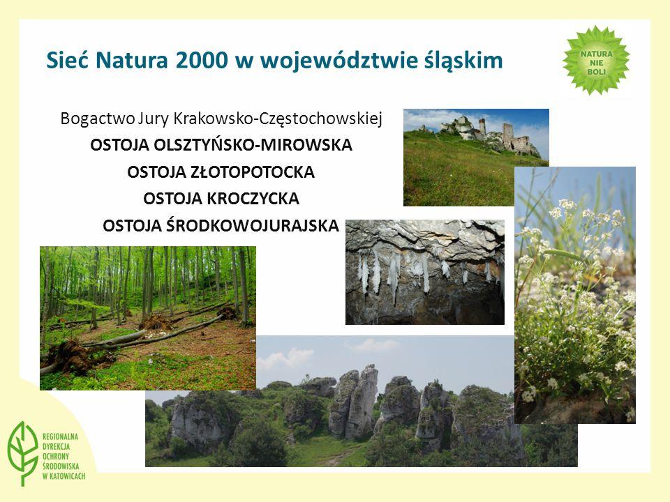 Sieć Natura 2000 w województwie śląskim Bogactwo Jury Krakowsko-Częstochowskiej OSTOJA OLSZTYŃSKO-MIROWSKA OSTOJA ZŁOTOPOTOCKA OSTOJA KROCZYCKA OSTOJA ŚRODKOWOJURAJSKA