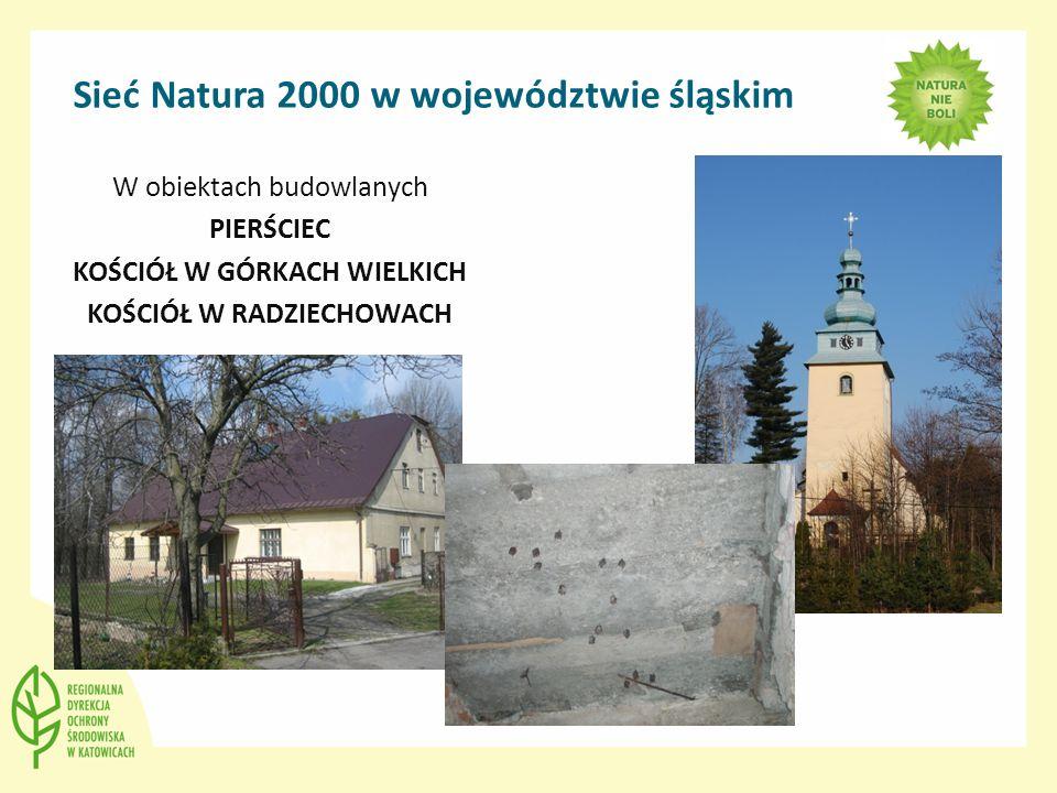 Sieć Natura 2000 w województwie śląskim W obiektach budowlanych PIERŚCIEC KOŚCIÓŁ W GÓRKACH WIELKICH KOŚCIÓŁ W RADZIECHOWACH