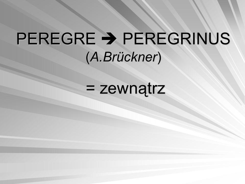 PEREGRE  PEREGRINUS (A.Brückner) = zewnątrz