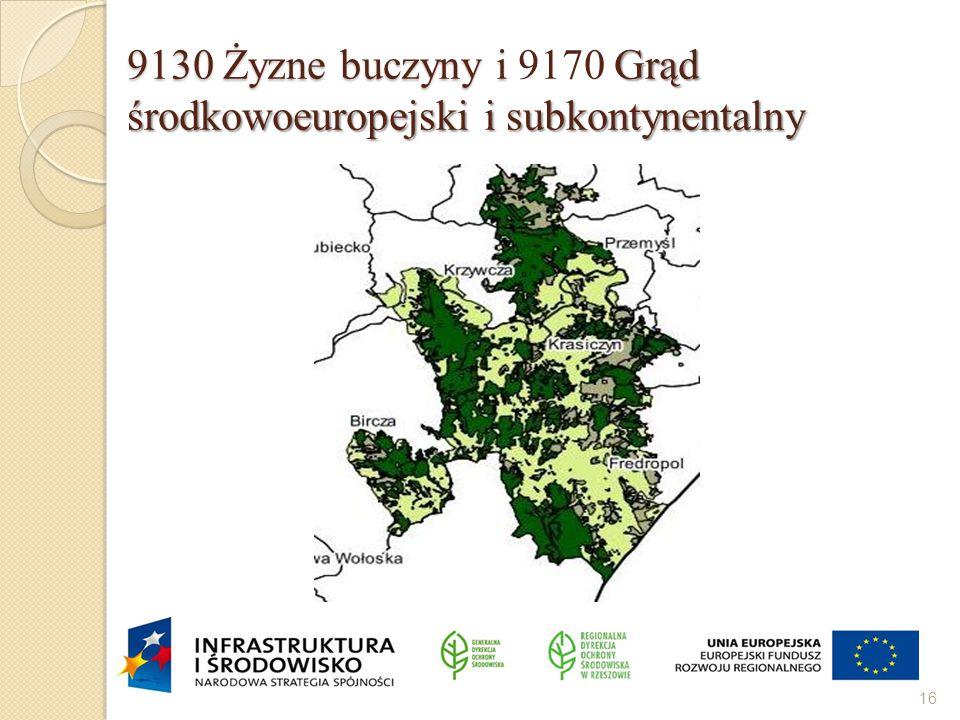 9130 Żyzne buczyny i Grąd środkowoeuropejski i subkontynentalny 9130 Żyzne buczyny i 9170 Grąd środkowoeuropejski i subkontynentalny 16
