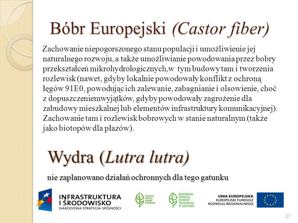 Bóbr Europejski (Castor fiber) Zachowanie niepogorszonego stanu populacji i umożliwienie jej naturalnego rozwoju, a także umożliwianie powodowania prz