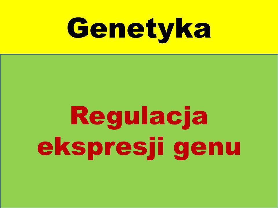 Genetyka Regulacja ekspresji genu