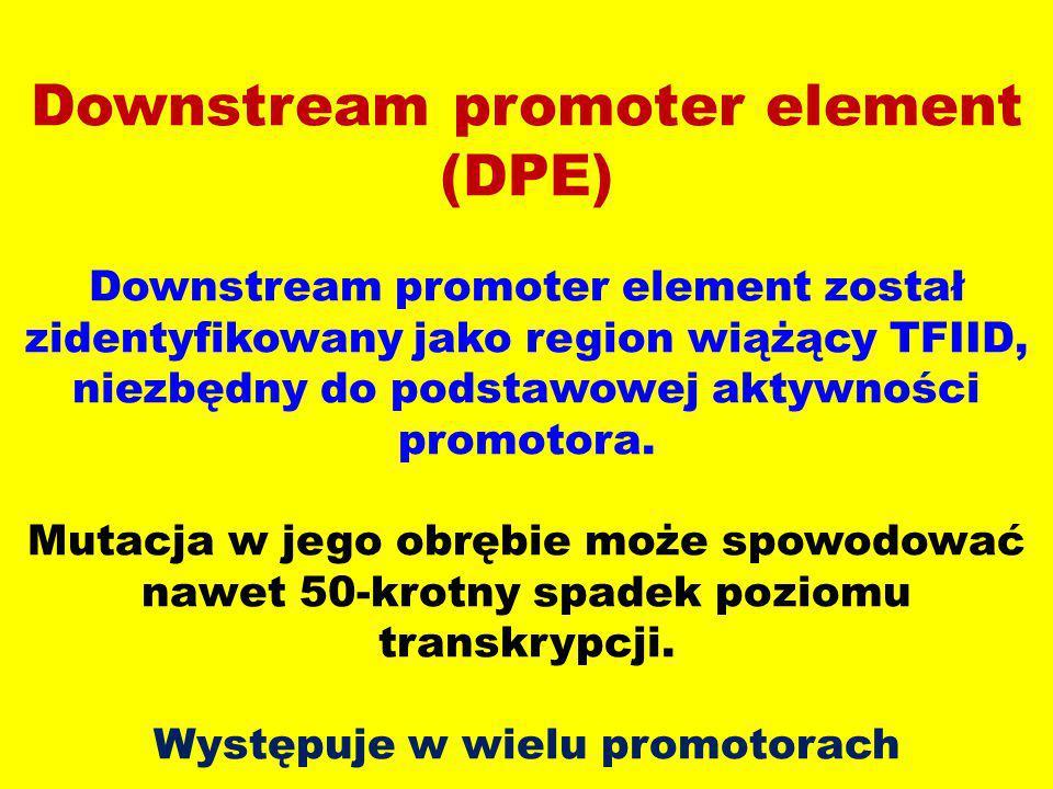 Downstream promoter element (DPE) Downstream promoter element został zidentyfikowany jako region wiążący TFIID, niezbędny do podstawowej aktywności pr