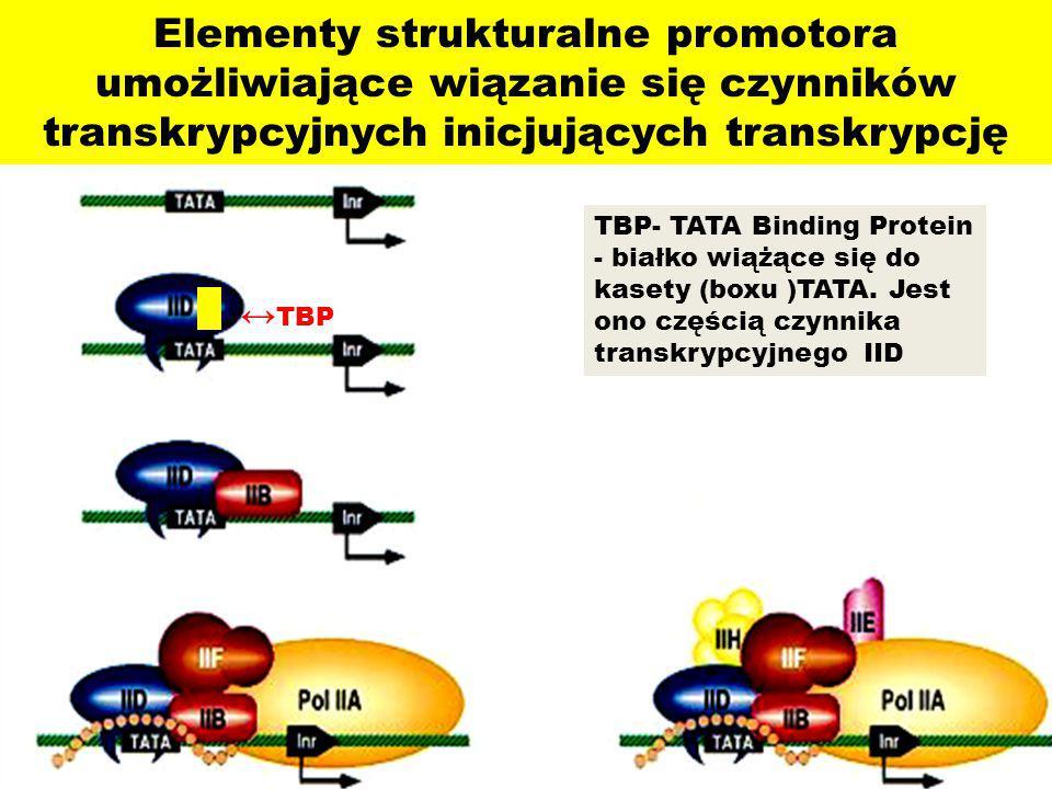 Elementy strukturalne promotora umożliwiające wiązanie się czynników transkrypcyjnych inicjujących transkrypcję TBP- TATA Binding Protein - białko wią