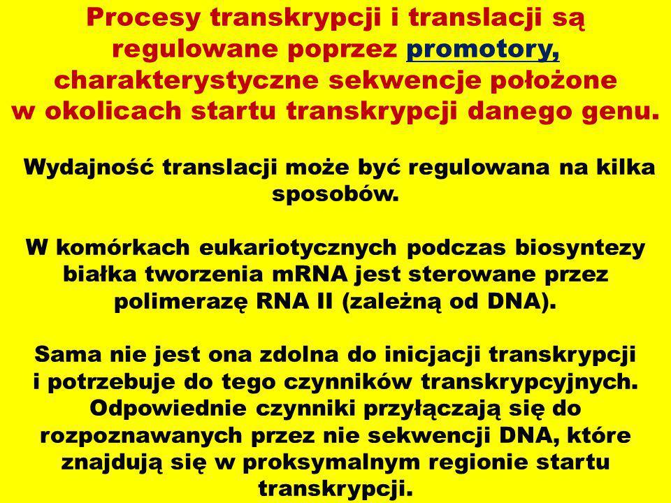Procesy transkrypcji i translacji są regulowane poprzez promotory, charakterystyczne sekwencje położone w okolicach startu transkrypcji danego genu. W