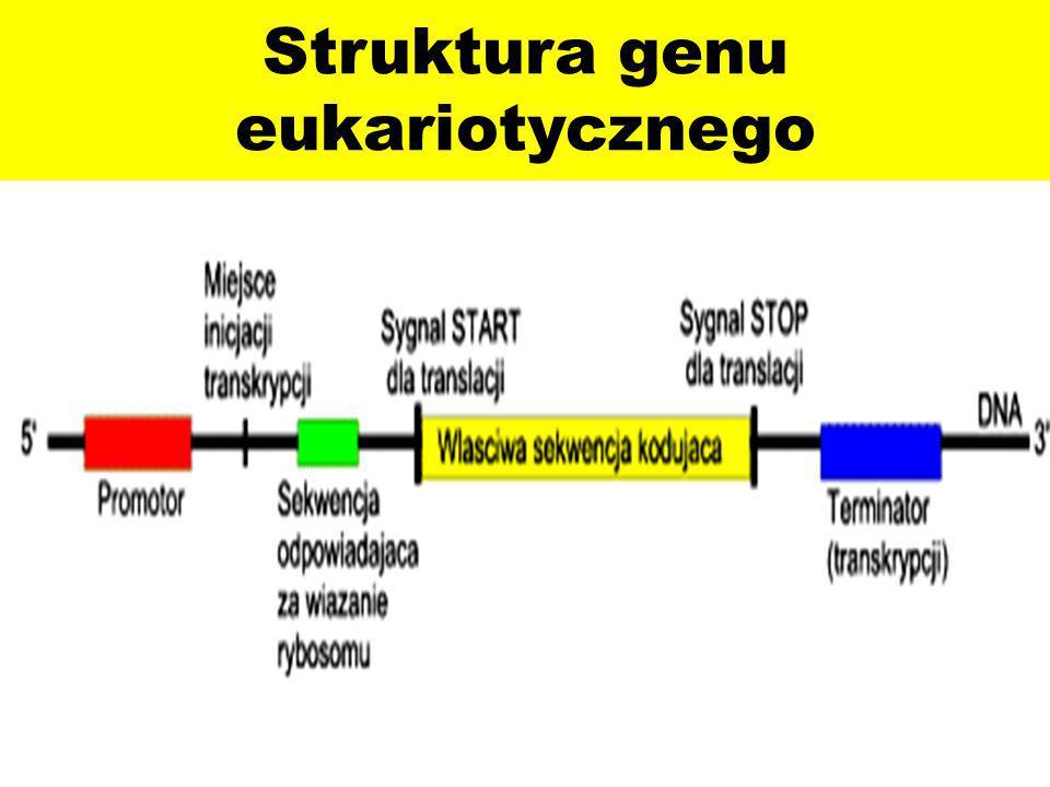 Promotor może wykazywać odmienne umiejscowienie w odniesieniu do miejsca startu transkrypcji.