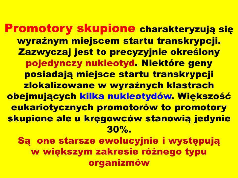 Promotory rozproszone W tego typu promotorach można znaleźć wiele miejsc startu transkrypcji.
