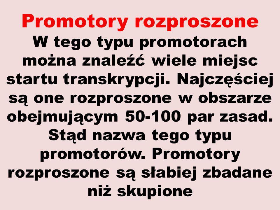 Promotory rozproszone W tego typu promotorach można znaleźć wiele miejsc startu transkrypcji. Najczęściej są one rozproszone w obszarze obejmującym 50