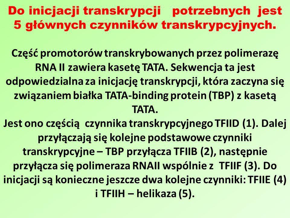 Do inicjacji transkrypcji potrzebnych jest 5 głównych czynników transkrypcyjnych. Część promotorów transkrybowanych przez polimerazę RNA II zawiera ka