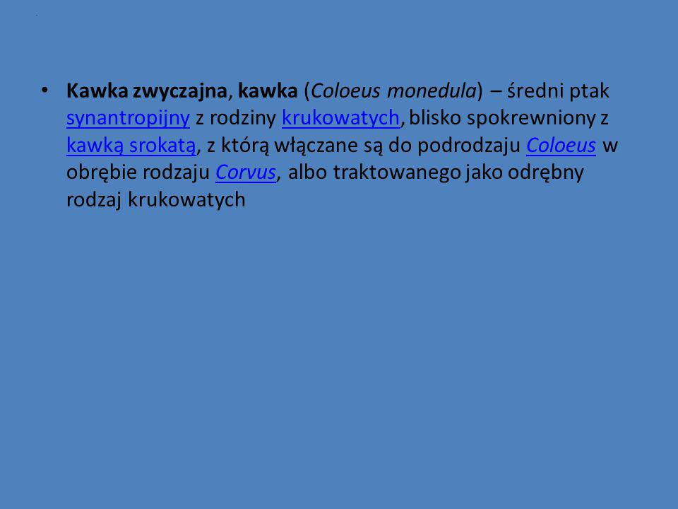 . Kawka zwyczajna, kawka (Coloeus monedula) – średni ptak synantropijny z rodziny krukowatych, blisko spokrewniony z kawką srokatą, z którą włączane s