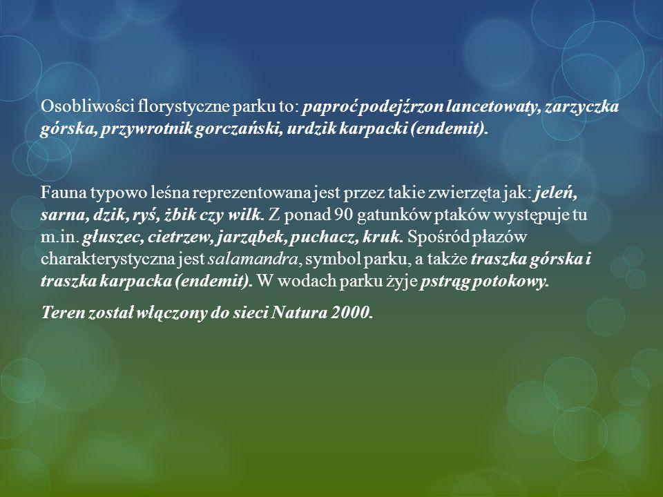 Osobliwości florystyczne parku to: paproć podejźrzon lancetowaty, zarzyczka górska, przywrotnik gorczański, urdzik karpacki (endemit).
