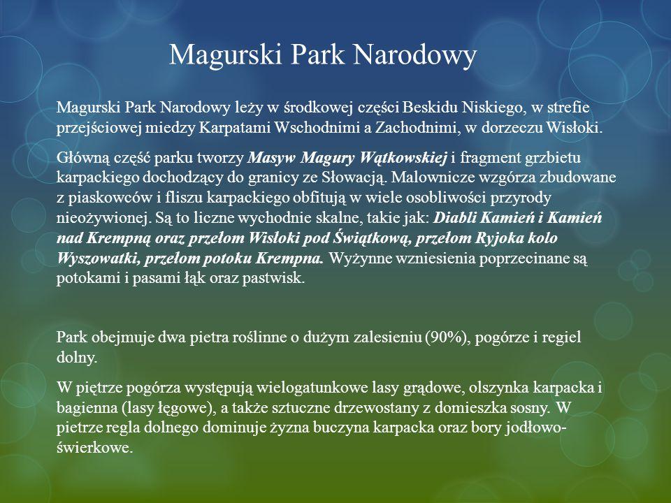 Magurski Park Narodowy Magurski Park Narodowy leży w środkowej części Beskidu Niskiego, w strefie przejściowej miedzy Karpatami Wschodnimi a Zachodnimi, w dorzeczu Wisłoki.