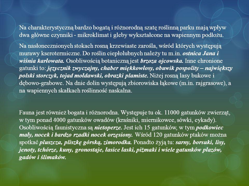 Na charakterystyczną bardzo bogatą i różnorodną szatę roślinną parku mają wpływ dwa główne czynniki - mikroklimat i gleby wykształcone na wapiennym podłożu.