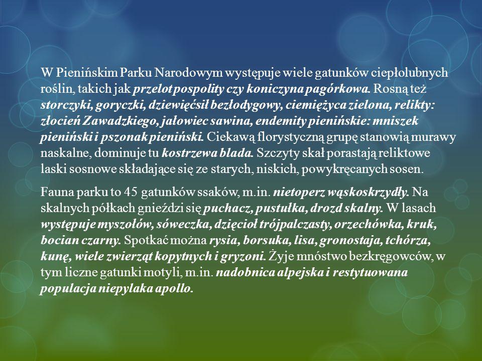 W Pienińskim Parku Narodowym występuje wiele gatunków ciepłolubnych roślin, takich jak przelot pospolity czy koniczyna pagórkowa.