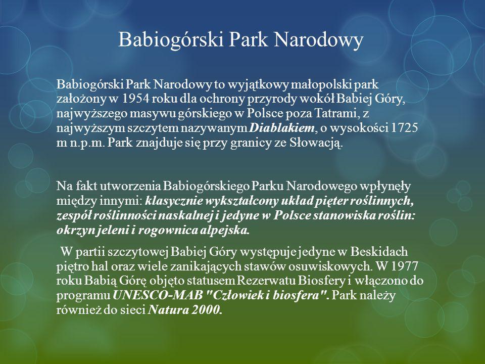 Babiogórski Park Narodowy Babiogórski Park Narodowy to wyjątkowy małopolski park założony w 1954 roku dla ochrony przyrody wokół Babiej Góry, najwyższego masywu górskiego w Polsce poza Tatrami, z najwyższym szczytem nazywanym Diablakiem, o wysokości 1725 m n.p.m.