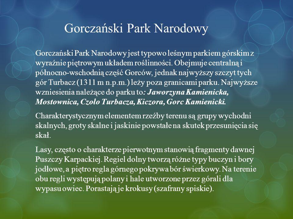 Gorczański Park Narodowy Gorczański Park Narodowy jest typowo leśnym parkiem górskim z wyraźnie piętrowym układem roślinności.