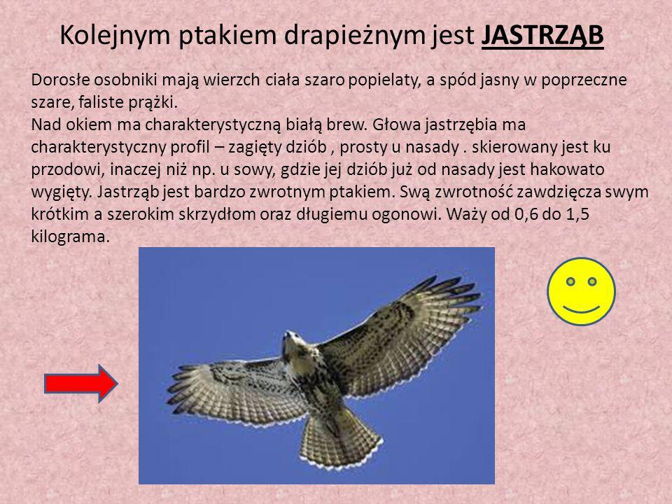 Kolejnym ptakiem drapieżnym jest JASTRZĄB Dorosłe osobniki mają wierzch ciała szaro popielaty, a spód jasny w poprzeczne szare, faliste prążki. Nad ok