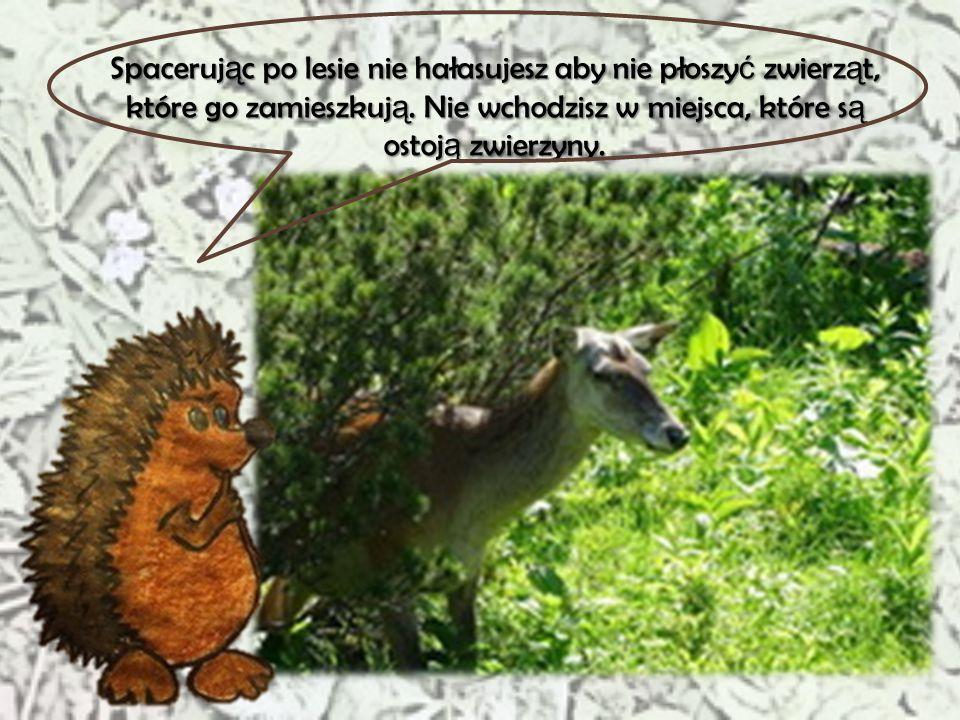 Najwi ę kszym przyjacielem lasu jest le ś niczy, poniewa ż to on si ę nim opiekuje. Jednak dzi ś opowiem Wam o innej przyja ź ni, która ł ą czy las z