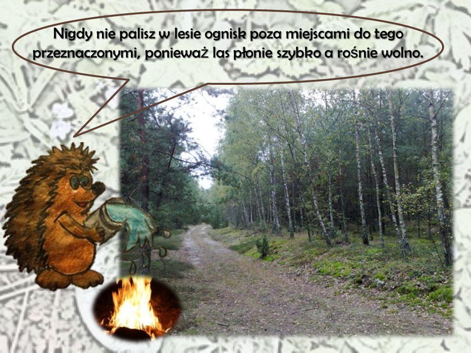 Wynosisz z lasu wszystko to, co do niego przyniosłe ś, poniewa ż ś mieci mu szkodz ą.