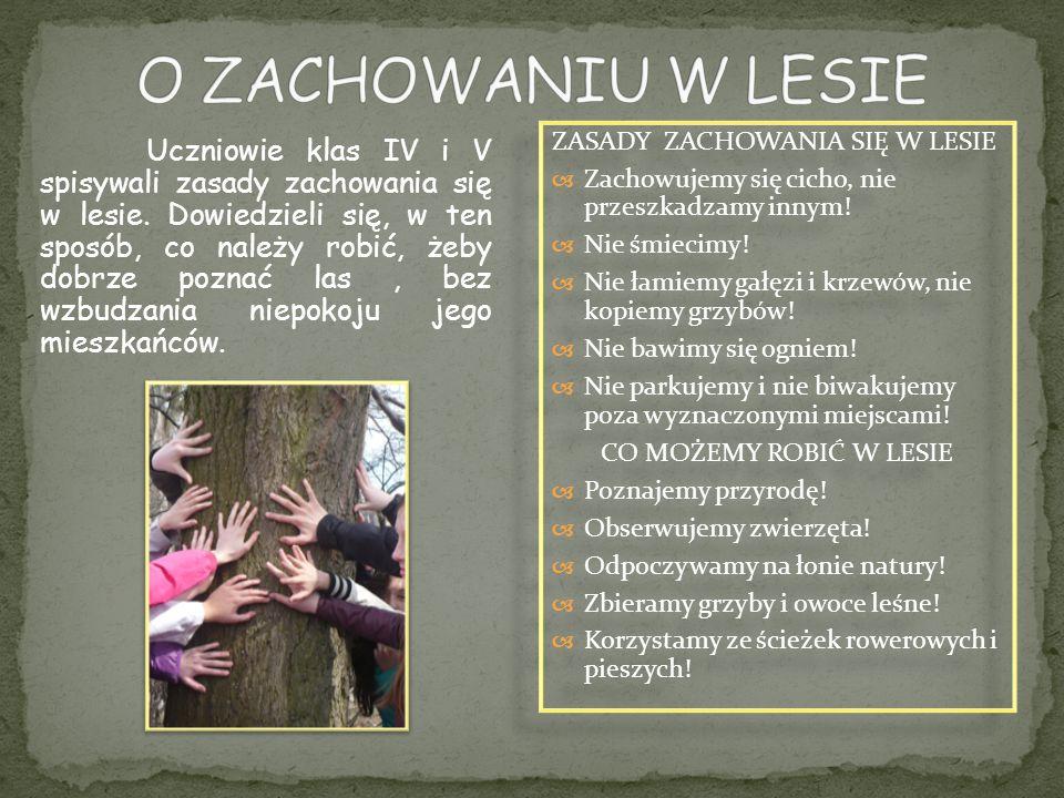 Uczniowie klas IV i V spisywali zasady zachowania się w lesie. Dowiedzieli się, w ten sposób, co należy robić, żeby dobrze poznać las, bez wzbudzania