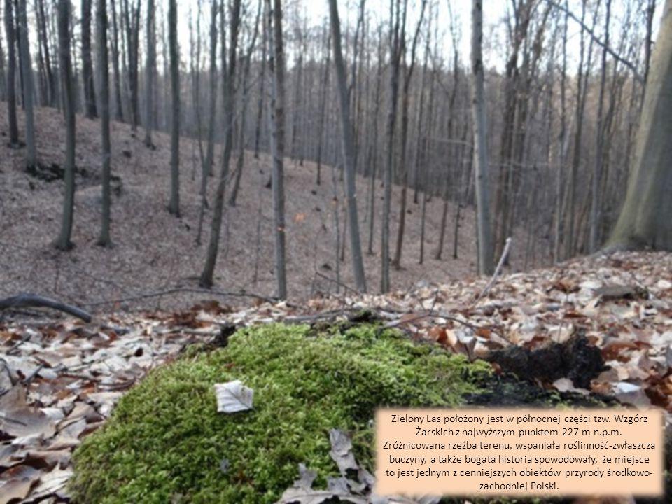 Zielony Las położony jest w północnej części tzw.Wzgórz Żarskich z najwyższym punktem 227 m n.p.m.