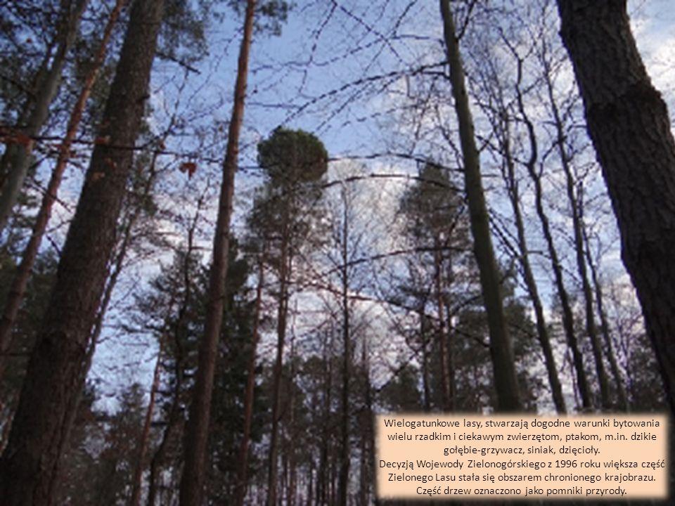 Zielony Las położony jest w północnej części tzw. Wzgórz Żarskich z najwyższym punktem 227 m n.p.m. Zróżnicowana rzeźba terenu, wspaniała roślinność-z