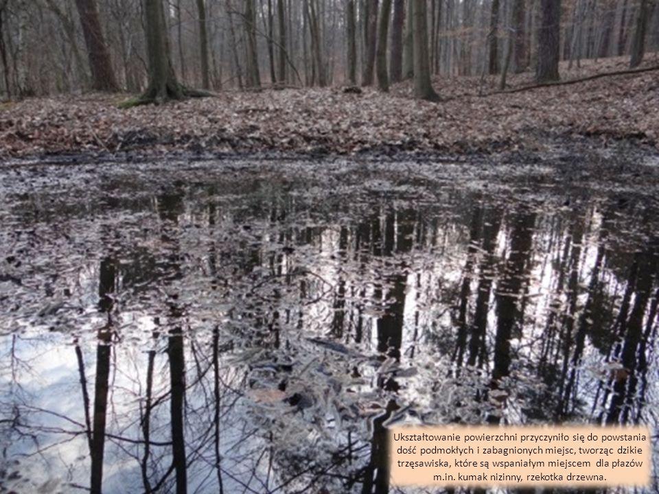 Warunki glebowe, wodne i mikroklimat przyczyniły się do powstania wielu unikatowych i ciekawych okazów drzew takich jak: egzotyczne kasztany, sosny we