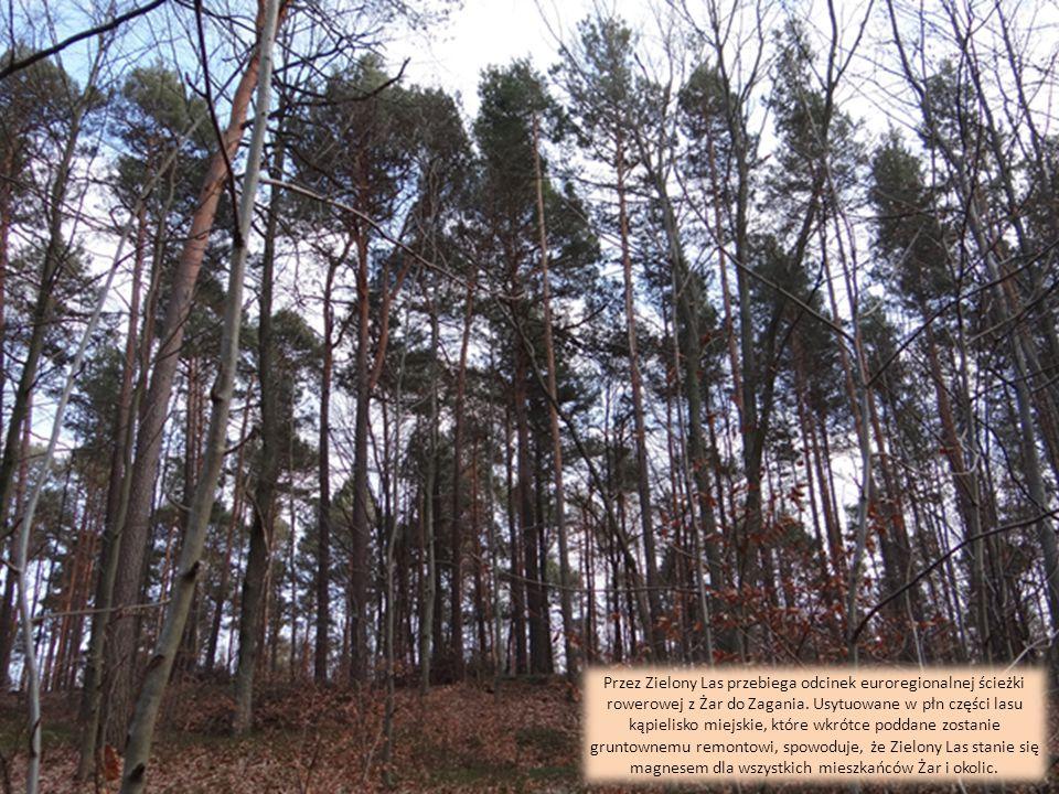 Zielony Las jest także ważnym elementem historii regionu Żar. Oprócz traktów, pomników, starych wież i innych wspaniałości godną uwagi jest Kamienna W