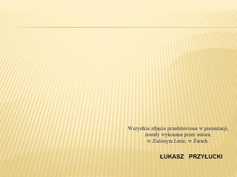 ŁUKASZ PRZYŁUCKI Wszystkie zdjęcia przedstawione w prezentacji, zostały wykonane przez autora, w Zielonym Lesie, w Żarach.