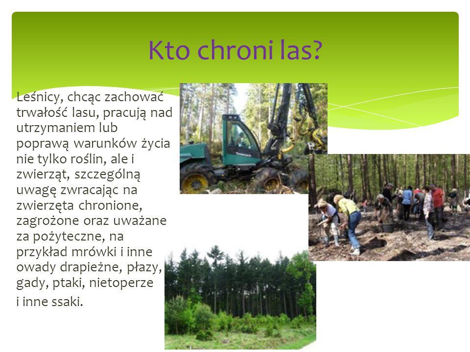 Leśnicy, chcąc zachować trwałość lasu, pracują nad utrzymaniem lub poprawą warunków życia nie tylko roślin, ale i zwierząt, szczególną uwagę zwracając