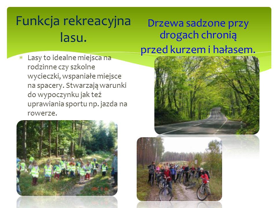 Funkcja rekreacyjna lasu.  Lasy to idealne miejsca na rodzinne czy szkolne wycieczki, wspaniałe miejsce na spacery. Stwarzają warunki do wypoczynku j