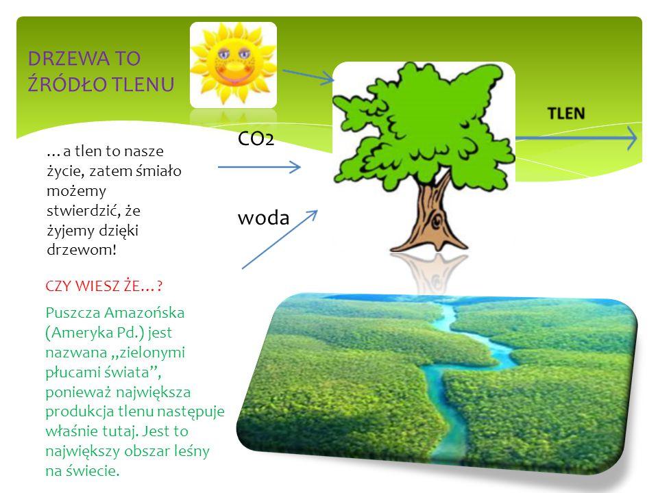 """CZY WIESZ ŻE…? Puszcza Amazońska (Ameryka Pd.) jest nazwana """"zielonymi płucami świata"""", ponieważ największa produkcja tlenu następuje właśnie tutaj. J"""