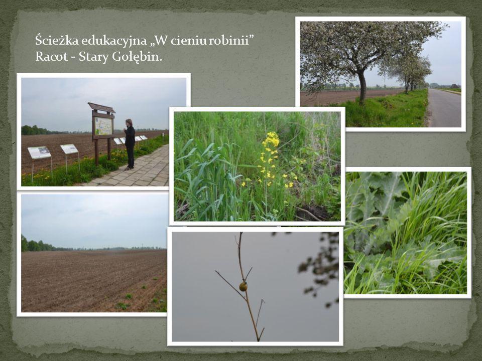 """Ścieżka edukacyjna """"W cieniu robinii"""" Racot - Stary Gołębin."""