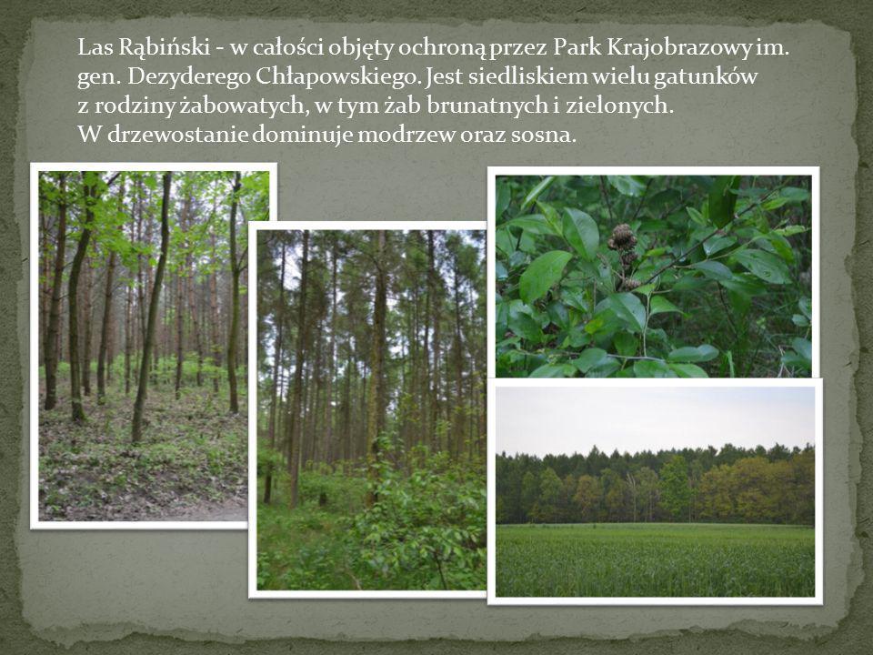 Las Rąbiński - w całości objęty ochroną przez Park Krajobrazowy im. gen. Dezyderego Chłapowskiego. Jest siedliskiem wielu gatunków z rodziny żabowatyc