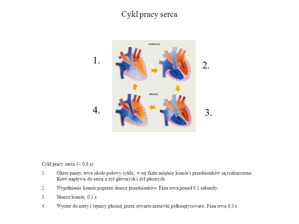 Cykl pracy serca Cykl pracy serca (~ 0.8 s): 1.Okres pauzy, trwa około połowy cyklu; w tej fazie mięśnie komór i przedsionków są rozkurczone.