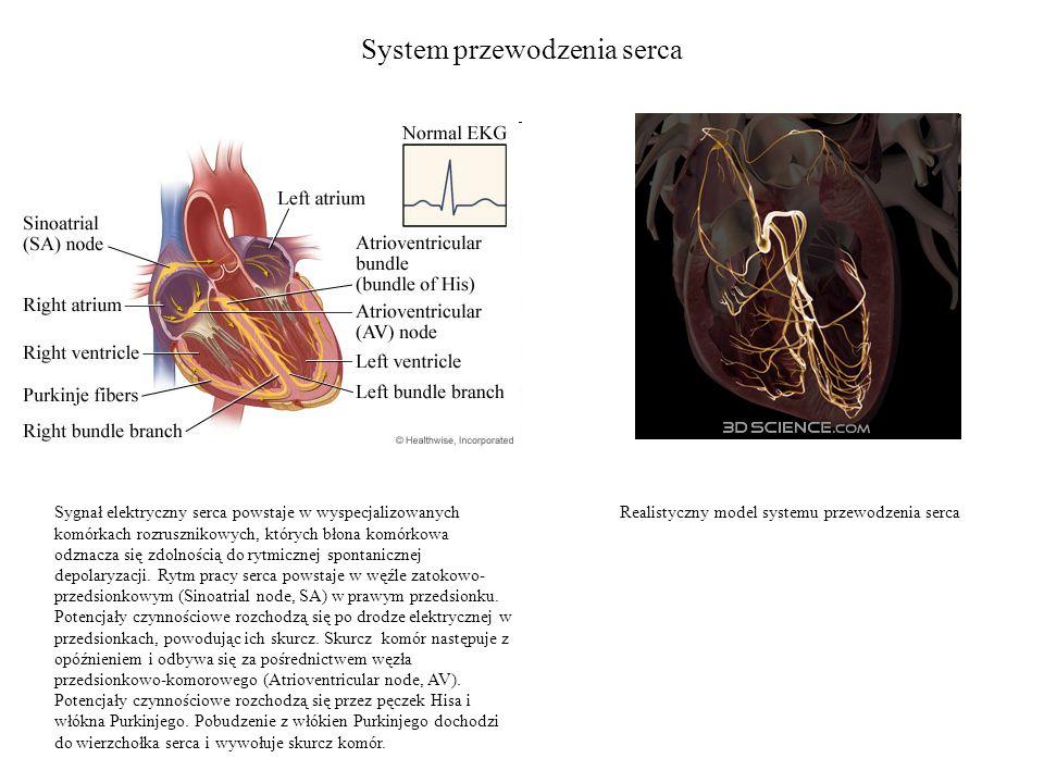 System przewodzenia serca Sygnał elektryczny serca powstaje w wyspecjalizowanych komórkach rozrusznikowych, których błona komórkowa odznacza się zdolnością do rytmicznej spontanicznej depolaryzacji.