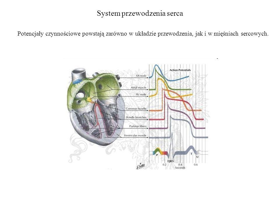 System przewodzenia serca Potencjały czynnościowe powstają zarówno w układzie przewodzenia, jak i w mięśniach sercowych.