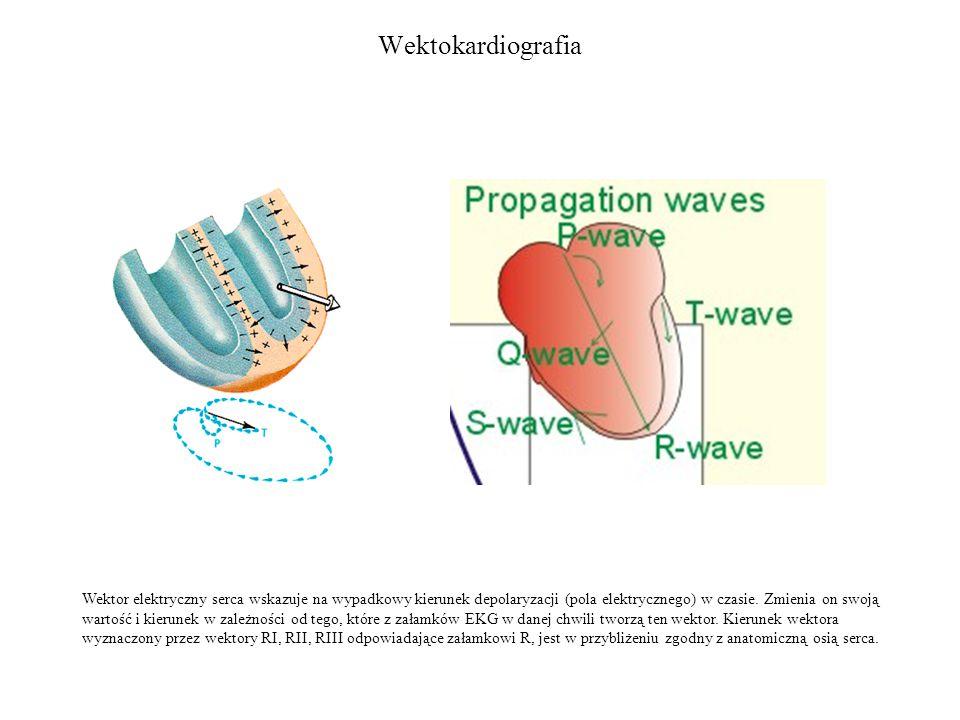 Wektokardiografia Wektor elektryczny serca wskazuje na wypadkowy kierunek depolaryzacji (pola elektrycznego) w czasie.