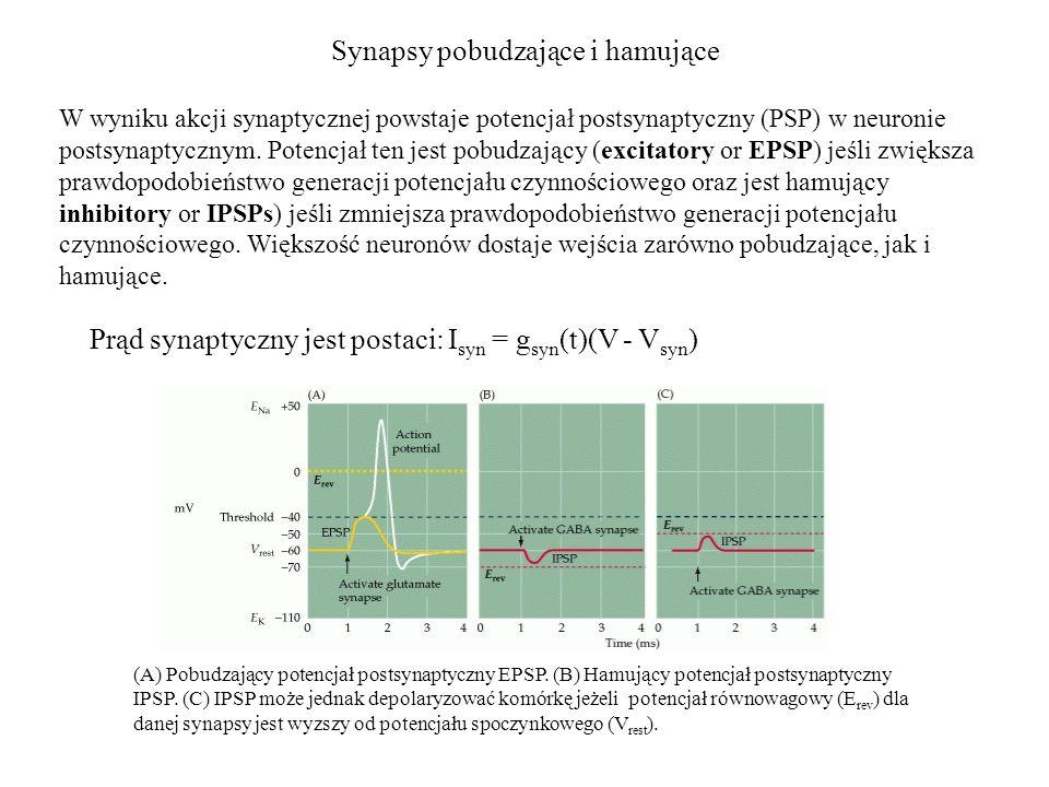 Synapsy pobudzające i hamujące W wyniku akcji synaptycznej powstaje potencjał postsynaptyczny (PSP) w neuronie postsynaptycznym.