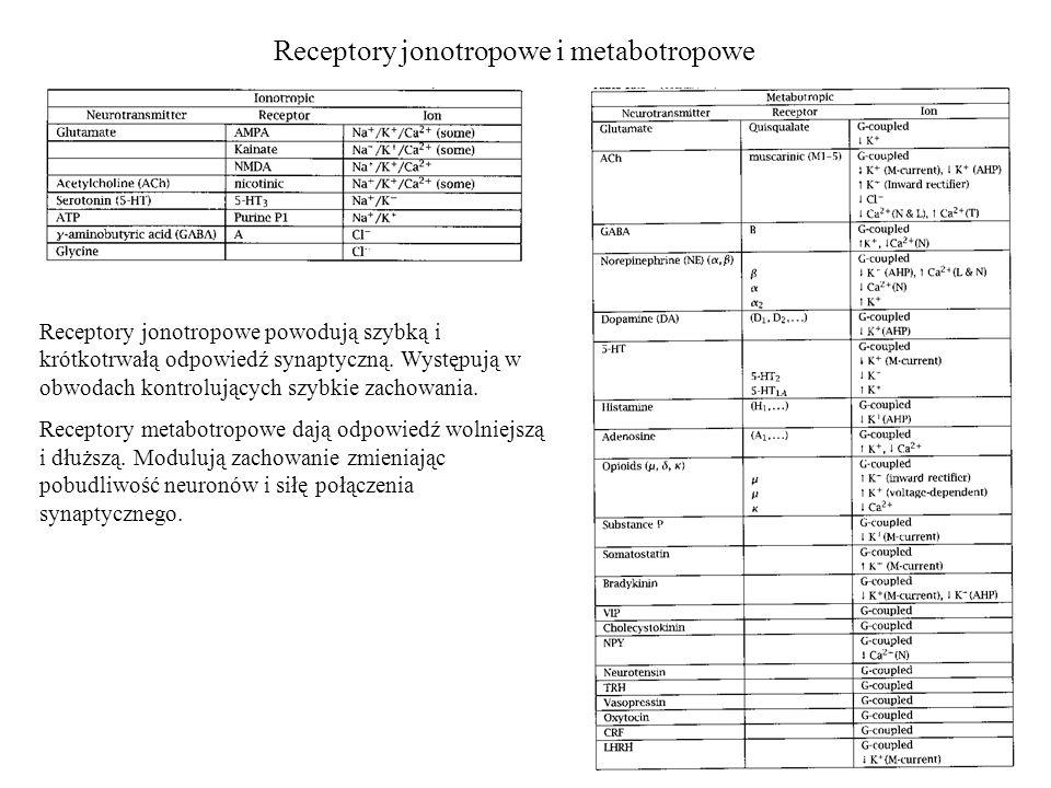 Receptory jonotropowe i metabotropowe Receptory jonotropowe powodują szybką i krótkotrwałą odpowiedź synaptyczną.