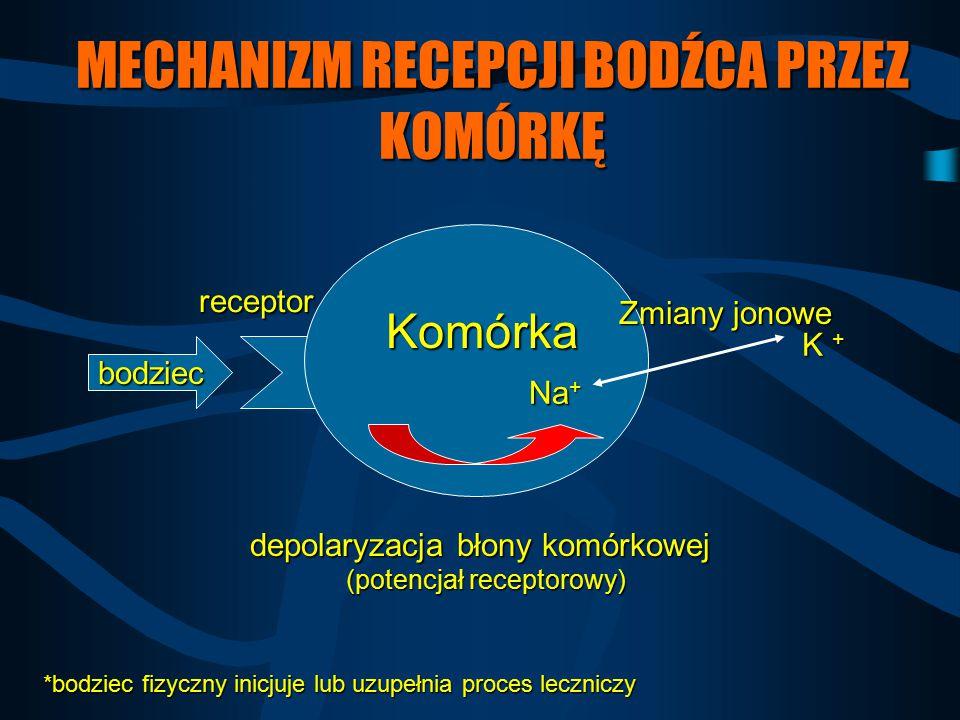 MECHANIZM RECEPCJI BODŹCA PRZEZ KOMÓRKĘ bodziec receptor Zmiany jonowe Na + K + Komórka depolaryzacja błony komórkowej (potencjał receptorowy) *bodzie