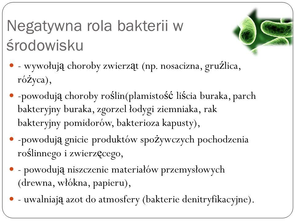 Negatywna rola bakterii w środowisku - wywołuj ą choroby zwierz ą t (np. nosacizna, gru ź lica, ró ż yca), -powoduj ą choroby ro ś lin(plamisto ść li