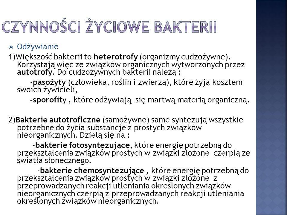  Odżywianie 1)Większość bakterii to heterotrofy (organizmy cudzożywne).