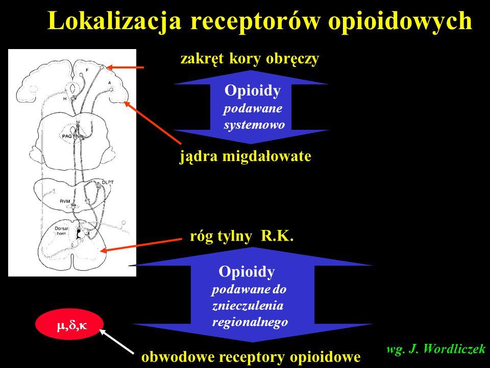 Lokalizacja receptorów opioidowych zakręt kory obręczy jądra migdałowate róg tylny R.K.   obwodowe receptory opioidowe Opioidy podawane syste