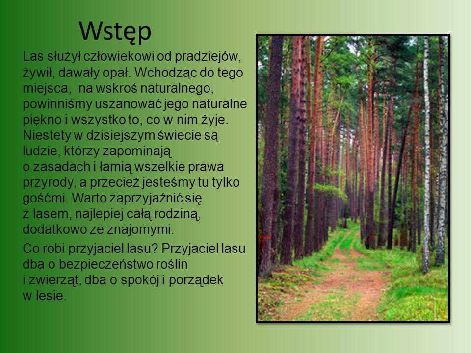 Wstęp Las służył człowiekowi od pradziejów, żywił, dawały opał. Wchodząc do tego miejsca, na wskroś naturalnego, powinniśmy uszanować jego naturalne p
