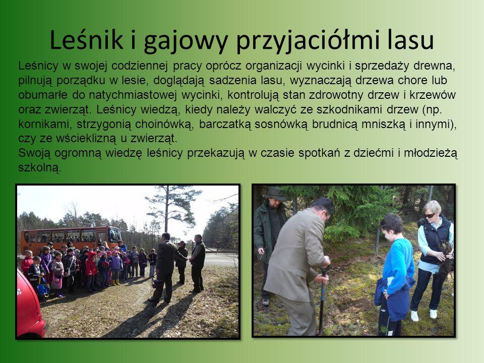 Leśnik i gajowy przyjaciółmi lasu Leśnicy w swojej codziennej pracy oprócz organizacji wycinki i sprzedaży drewna, pilnują porządku w lesie, doglądają