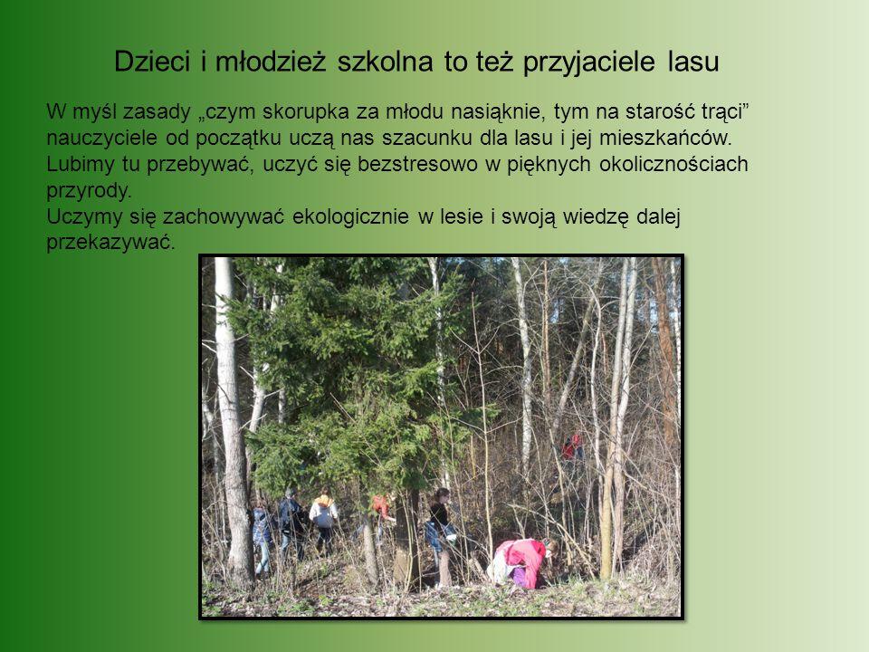 """Dzieci i młodzież szkolna to też przyjaciele lasu W myśl zasady """"czym skorupka za młodu nasiąknie, tym na starość trąci nauczyciele od początku uczą nas szacunku dla lasu i jej mieszkańców."""
