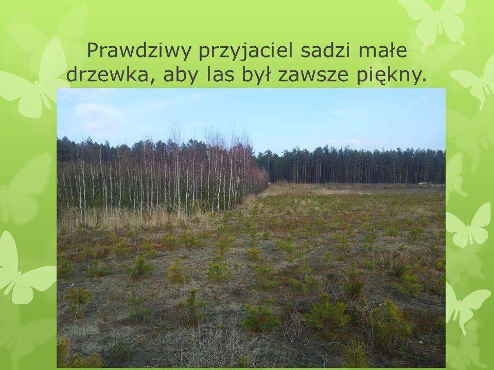 Prawdziwy przyjaciel sadzi małe drzewka, aby las był zawsze piękny.