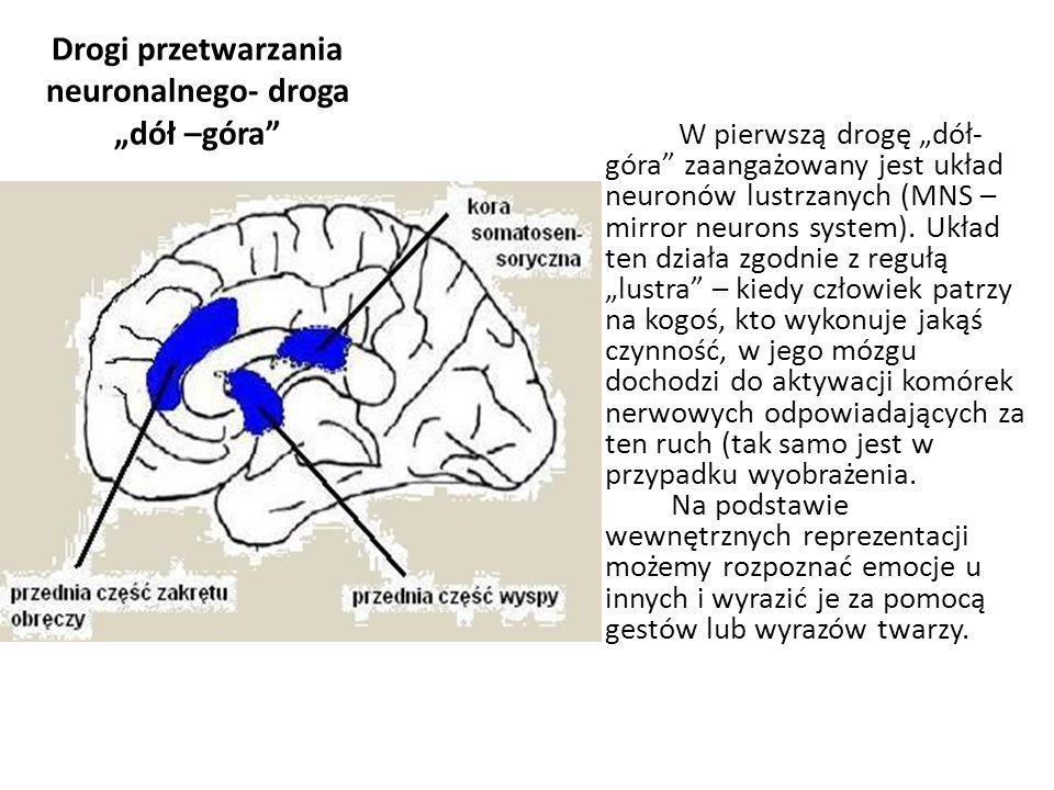 """Drogi przetwarzania neuronalnego- droga """"dół –góra"""" W pierwszą drogę """"dół- góra"""" zaangażowany jest układ neuronów lustrzanych (MNS – mirror neurons sy"""